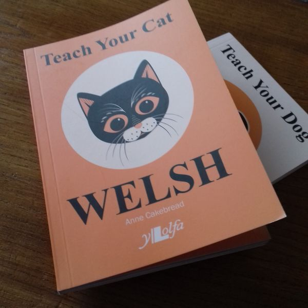 Michievous black cat to inspire people to learn Welsh!